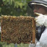 Irish Beekeeping Association about the importance of bees in Ireland